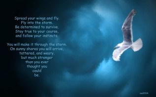 fly-copy