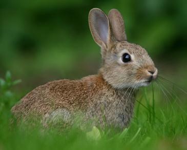 rabbit-meadow-1280x1024