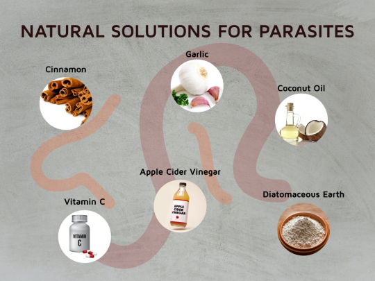 Removing Parasites to Fix Lyme & Chronic Illnesses – Dr  Jay