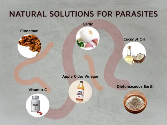 Removing Parasites to Fix Lyme & Chronic Illnesses – Dr  Jay