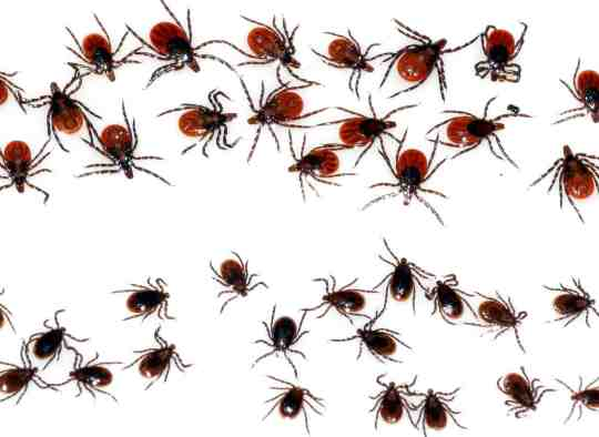health-ticks-lymedisease-geography-blackleggedtick-array
