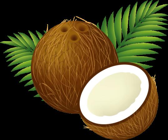 Coconut_Clipart_Cartoon-Custom